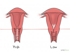 670px-Feel-Your-Cervix-Step-6