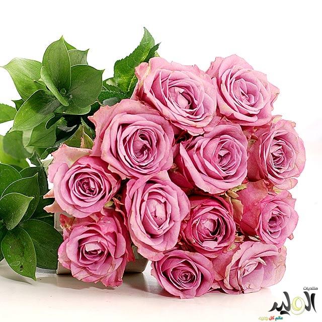 اجمل باقات الزهور الورود 2017, زهور ورود طبيعية جميلة مفرغة الخلفية,ورد جوري