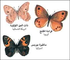 بالصور دورة حياة الفراشة 20160807 271