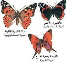 بالصور دورة حياة الفراشة 20160807 272