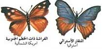 بالصور دورة حياة الفراشة 20160807 273