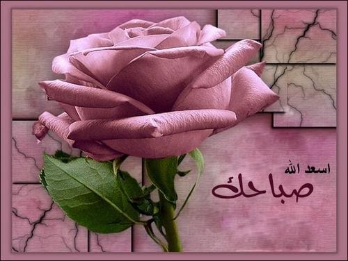 صورة صباح الورد والياسمين صباح يسعد ويفرح الغالين