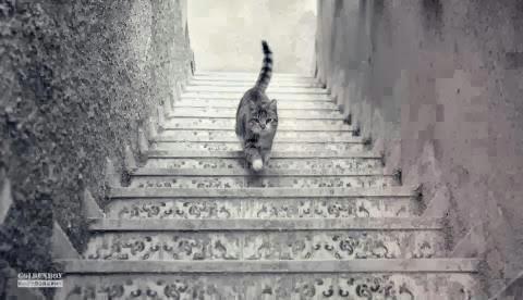 لغز قوة الملاحظة ملاحظة ذكاءَ و سرعة بديهة هَل القطة صاعدة ام هابطة