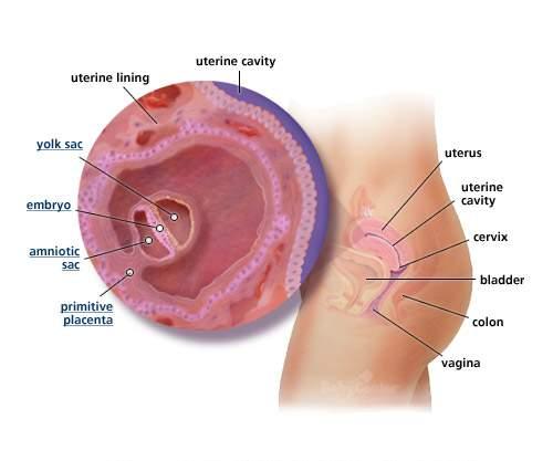 بالصور مراحل تكوين الجنين بالصور 20160907 944