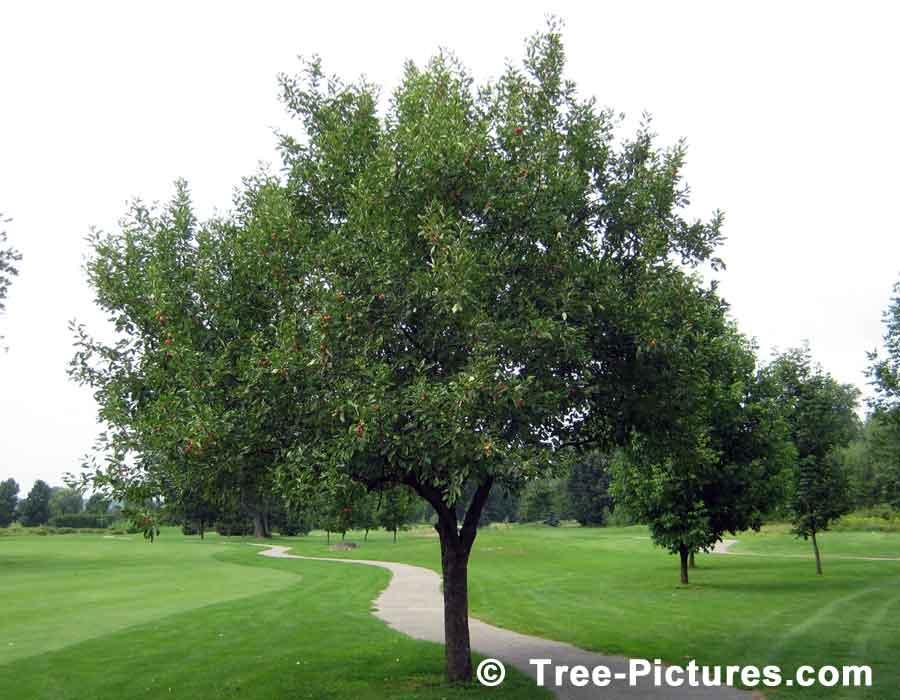 بالصور شجرة البلوط في فصل الصيف 20160908 2326