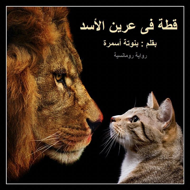 بالصور قصة عرين الاسد 20160908 423