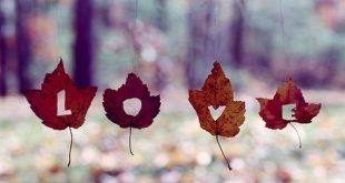 روايه لقاء الخريف الارشيف