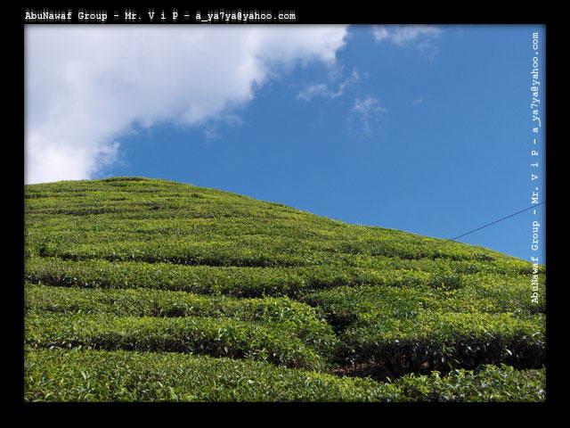 بالصور اجمل صور المناظر الطبيعية ف مالزيا 20160909 143