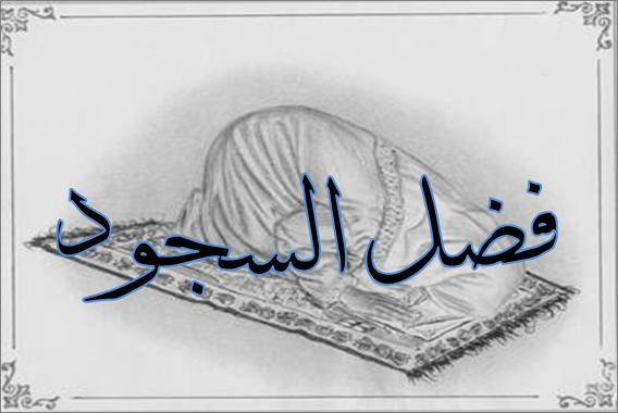 بالصور صورة محجبات بتسجد 20160909 380