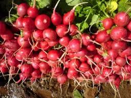 صور صورة نبات الفجل