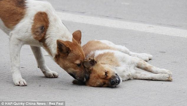 صور قتلت كلبا بسيارة