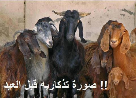 صور اساحبى فى العيد الاضحى