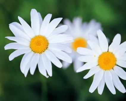 بالصور اشكال الورود في مريم 20160911 1951