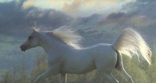 صور لاحصنة بيضاء