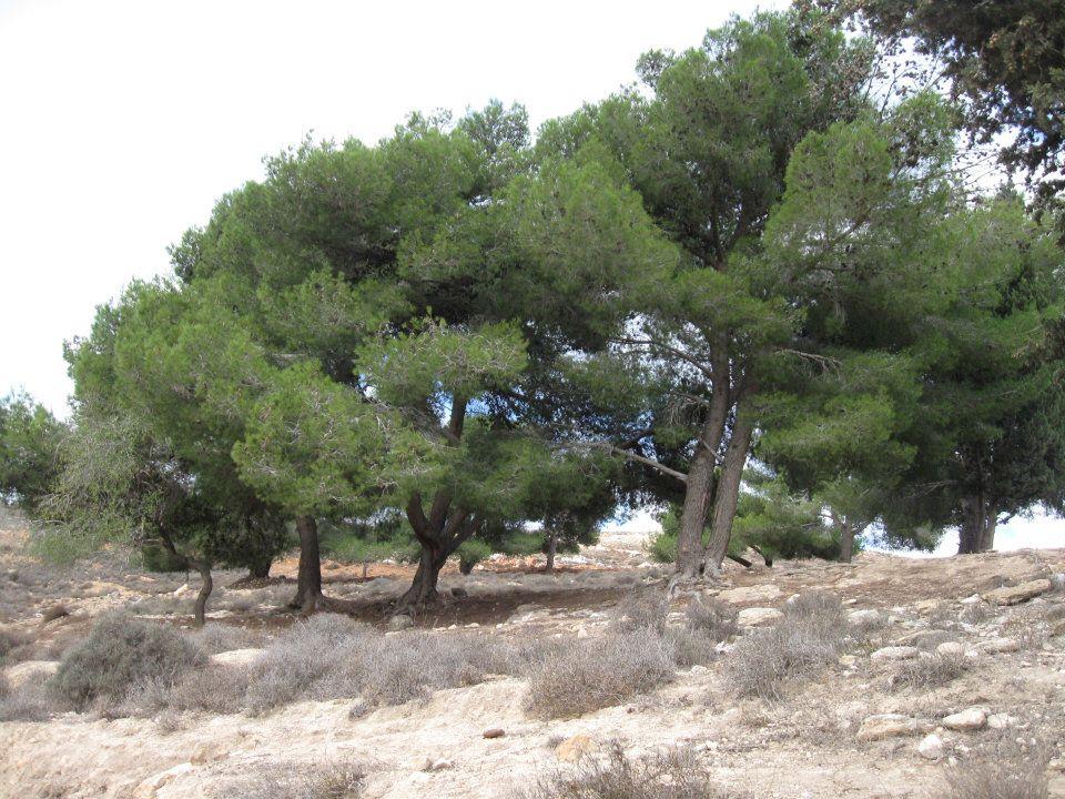 صور الاشجار الحرجية