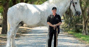بالصور اطول حصان في العالم 20160912 3117 1 310x165