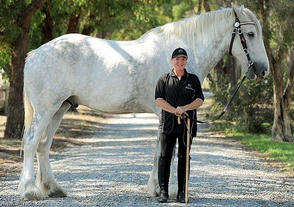 بالصور اطول حصان في العالم 20160912 3117
