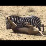 عالم الحيوانات المفترسة