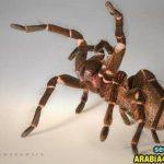 حشرات نادرة _ غريبة جدا
