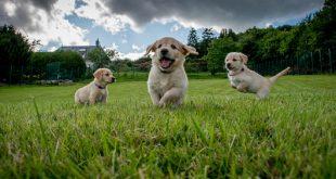 بالصور صور كلاب بلاك برى 20160914 3646 1 310x165