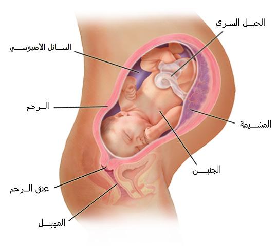 صور الحمل فى الشهر التاسع والولادة