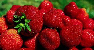 فوائد اهمية الفراولة للجسم