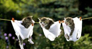 صور صور قطط مضحكة