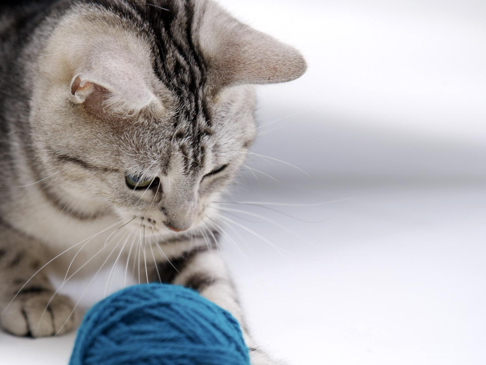 صورة اسماء اناث قطط