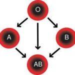 فصيلة الدم ab موجب