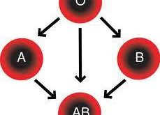 صور فصيلة الدم ab موجب