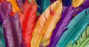 صور صور ملونة للتصميم