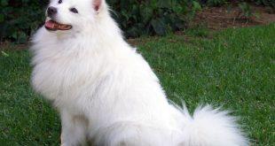صور تفسير شراء كلب ابيض لابن سيرين