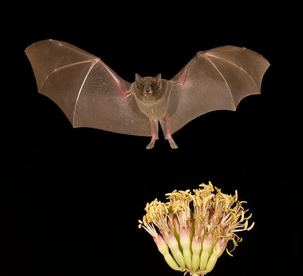 بالصور خلفيات خفافيش جميلة 20160917 4330