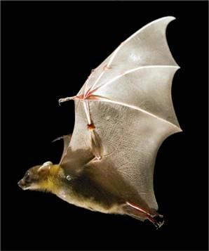 بالصور خلفيات خفافيش جميلة 20160917 4331