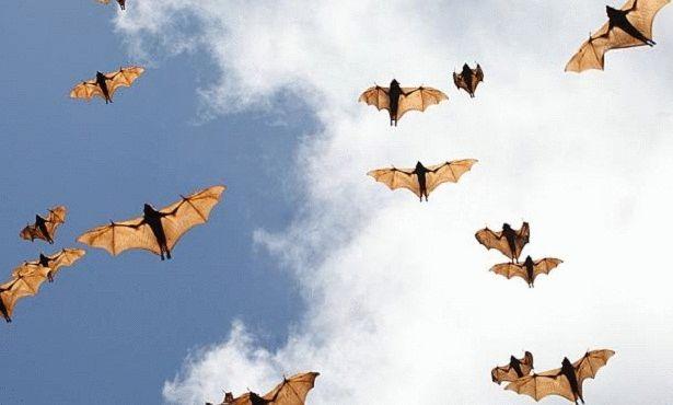 بالصور خلفيات خفافيش جميلة 20160917 4333