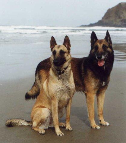 صور صورة كلاب جامدة جدا