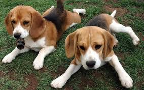 بالصور صورة كلاب جامدة جدا 20160917 4768