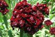 صور انواع الزهور البرية