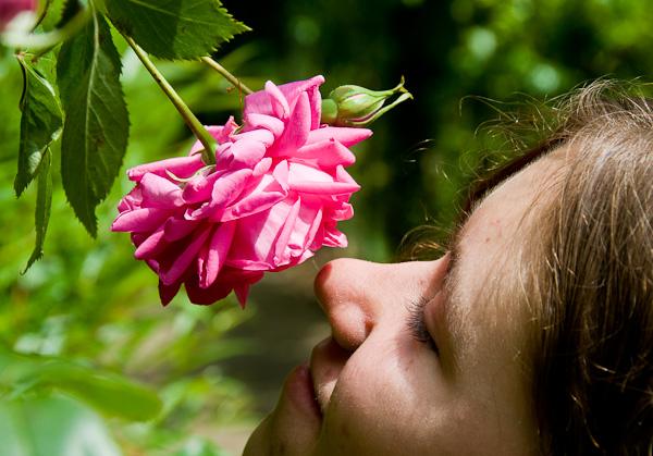 صور معلومات حول فائدة الورود