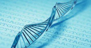 بالصور فحص الجينات الوراثية قبل الزواج الفصام السكر 20160919 1290 1 310x165