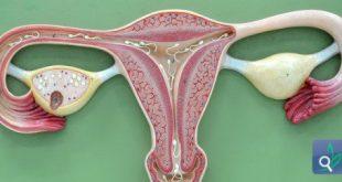 صور هل لحميه الرحم تؤثر على الاجنه