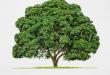 بالصور عبارات عن الشجرة 20160919 14 1 110x75