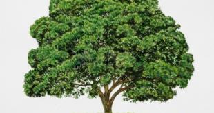 بالصور عبارات عن الشجرة 20160919 14 1 310x165