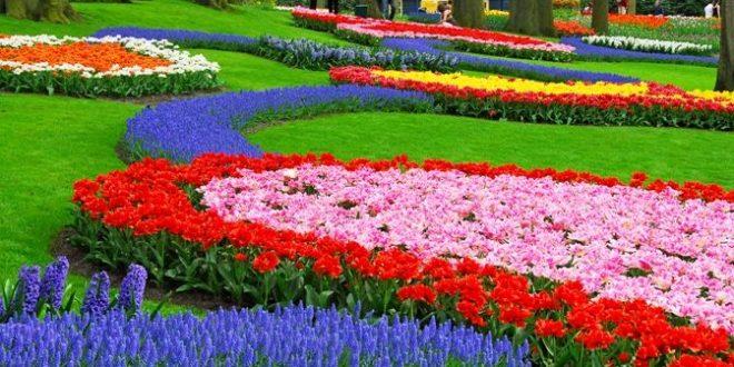 صور فصل الربيع ويكيبيديا