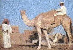 صور اشعار بدو