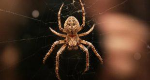 صور تفسير رؤية العنكبوت في المنام