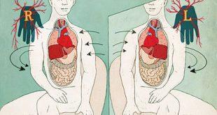 صور القلب في الجهو اليمنى