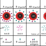 فصيلة الدم النادرة o