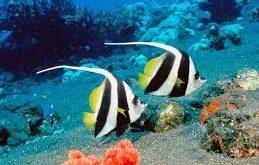 صور سمك في المنام