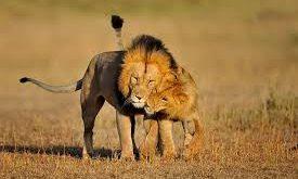 صور صور لتعانق الحيوانات في منتهى الرومانسية